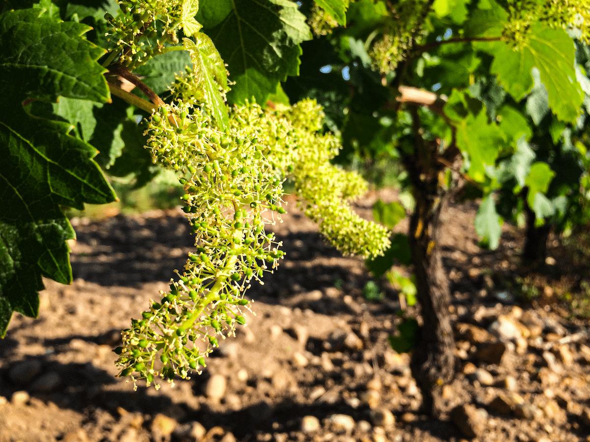 vins terroir