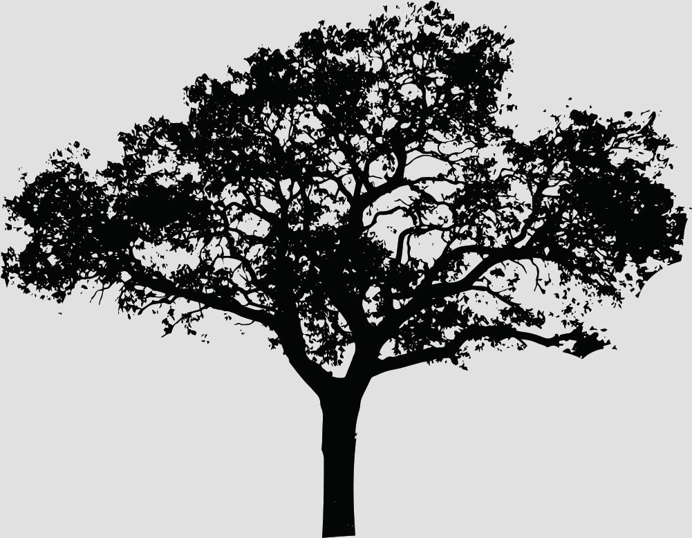 arbre vins de chinon
